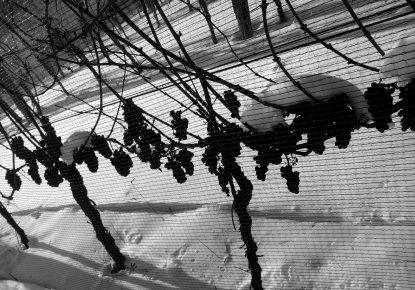 Ice Wine Adventure in Zagorje