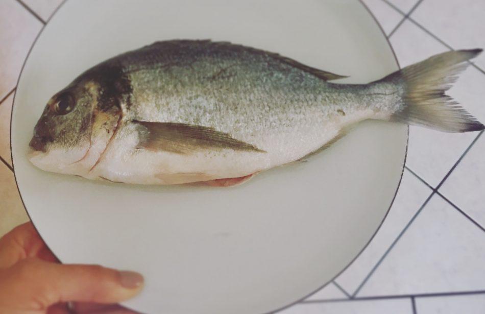Njihova riblja priča
