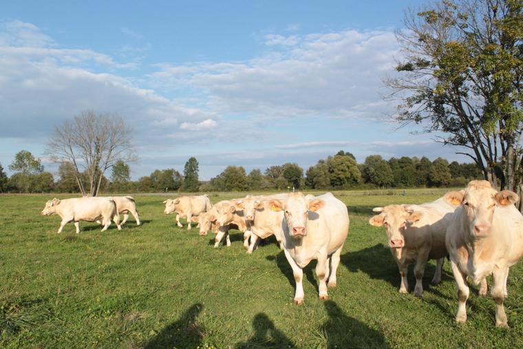 Sunčane livade – dom sretnih krava